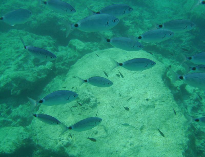 Green Bay - Fish Stone
