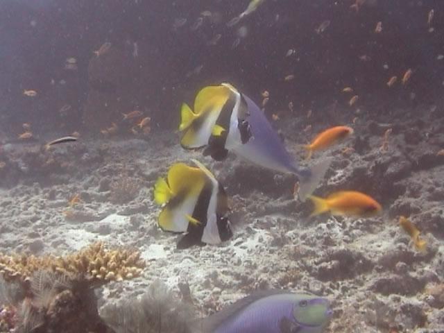 Pelican Rock - fish