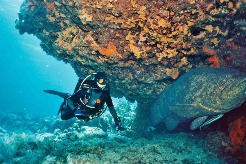 Fire Coral Cave in Molasses Reef - Diver and Goliath Grouper