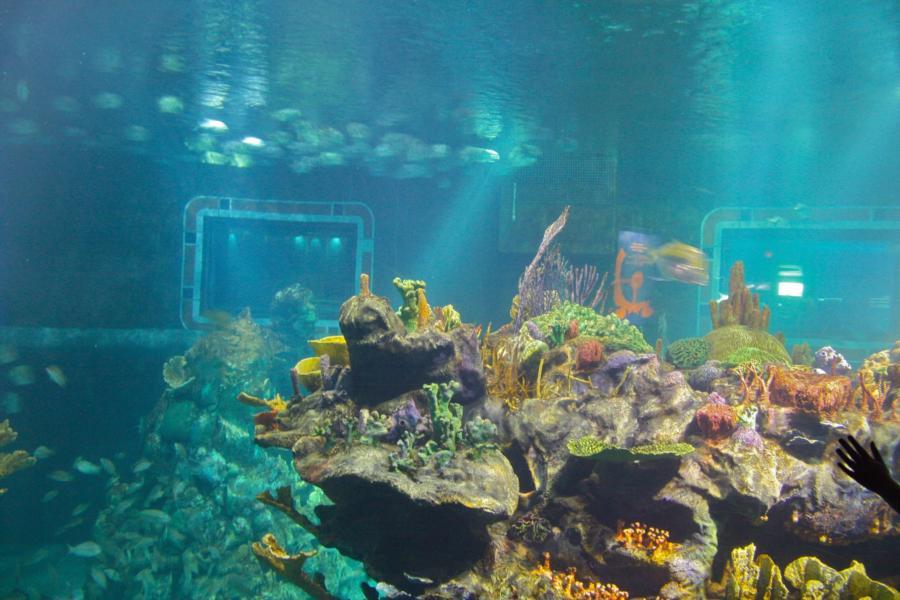 Water Tank Magic : Epcot divequest walt disney world living sea lake