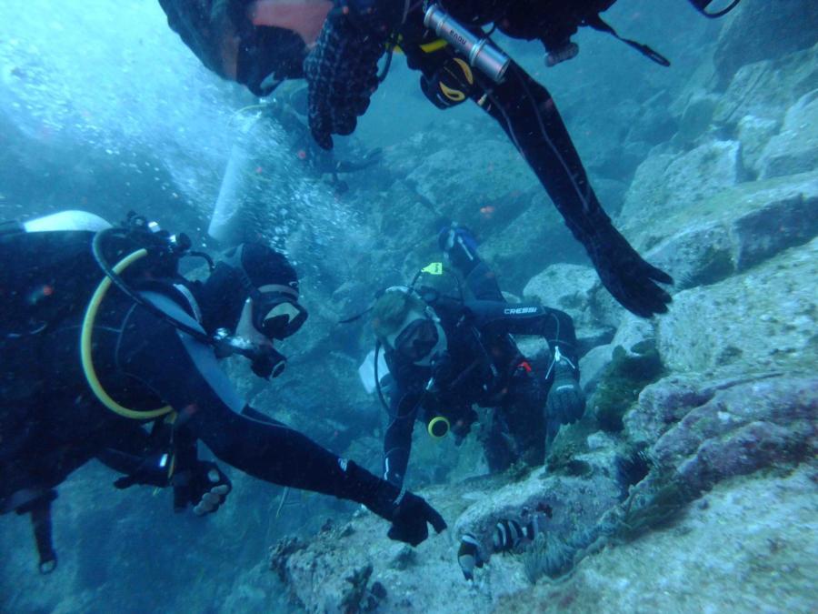 Fish Rock Cave - Found some Nemo fish (Clown Fish)