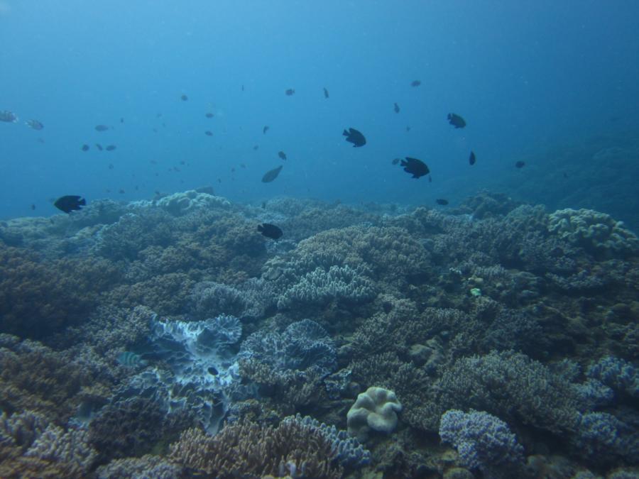 Junkyard - more beautiful coral