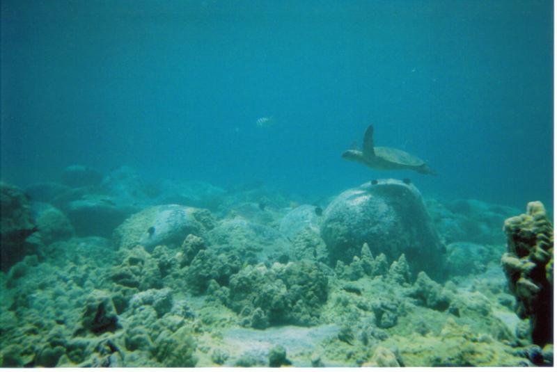 manta ray bay/ honokohau harbor - manta ray bay