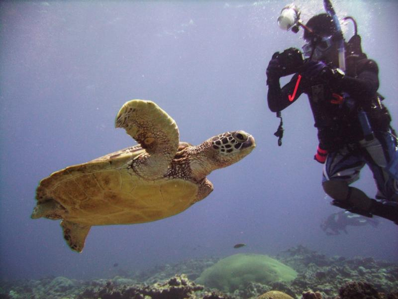 North Tokashiki-jima - Turtle & diver