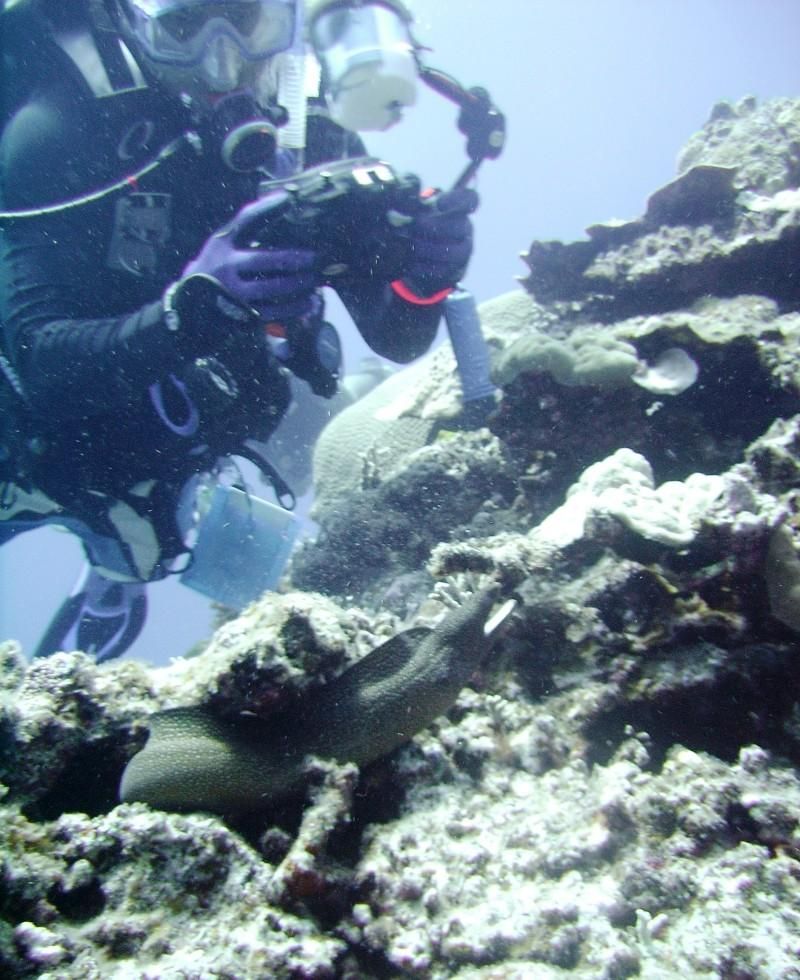 North Tokashiki-jima - Photographer & spotted moray eel