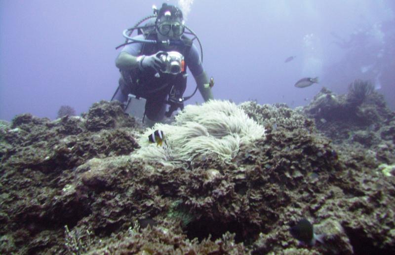 NE Tokashiki - Photographer enjoying anemone scene