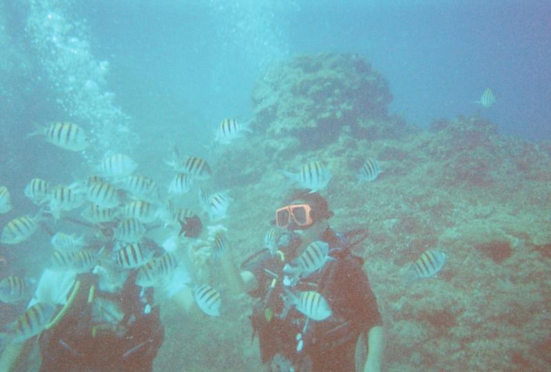 Sandals Ocho Rios - diving in jamaica