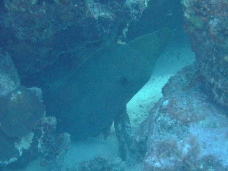 Angel City - moray eel