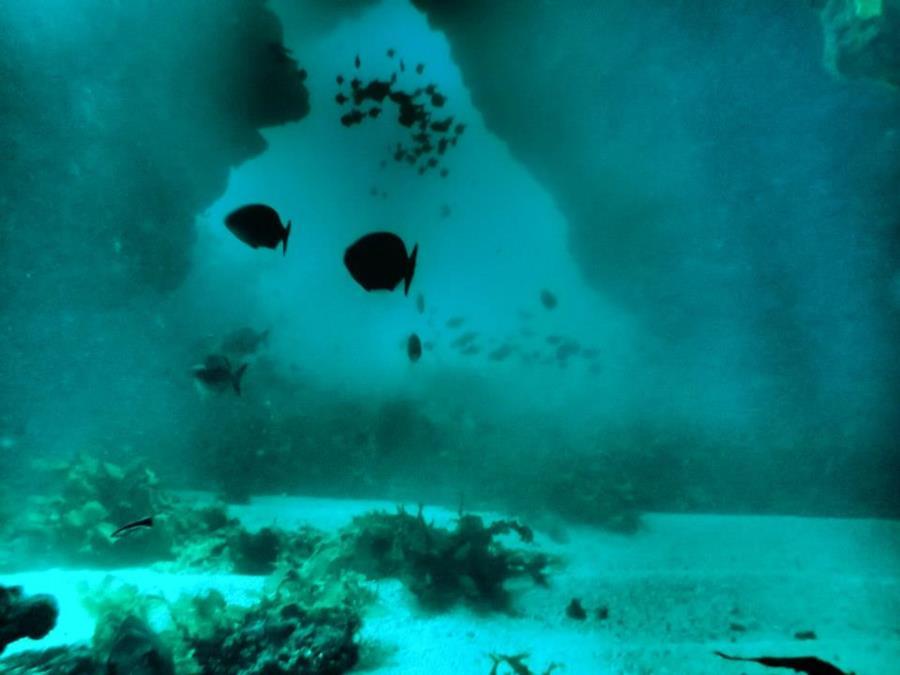 Rottnest Island - Swim Thrus