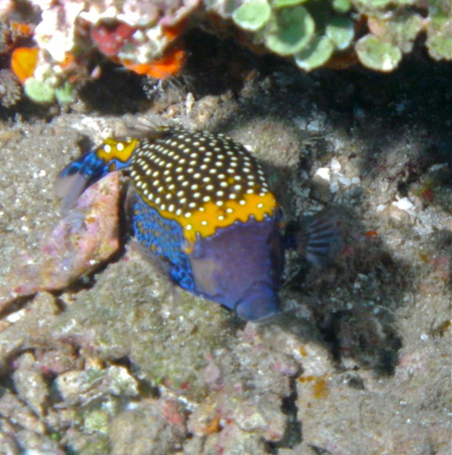 Mayon View Resort Reef - Fish