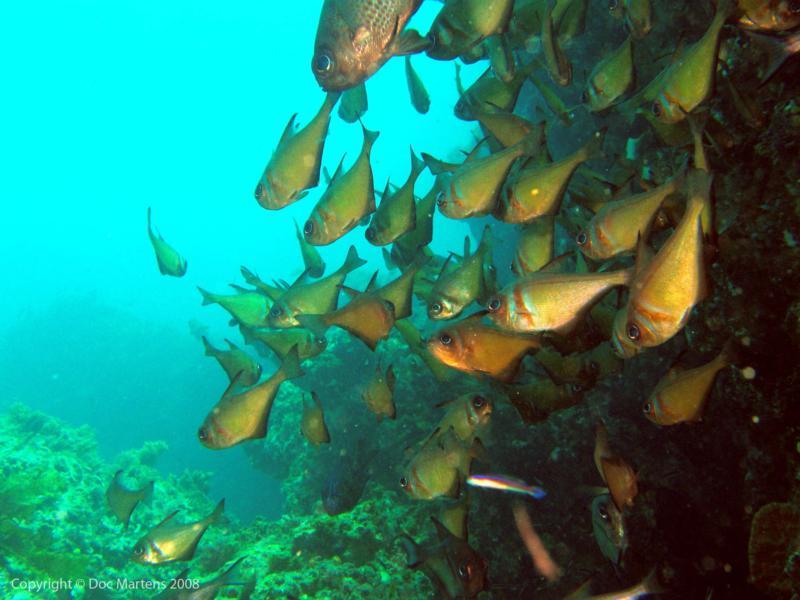 Elder Point Reef - Schools out