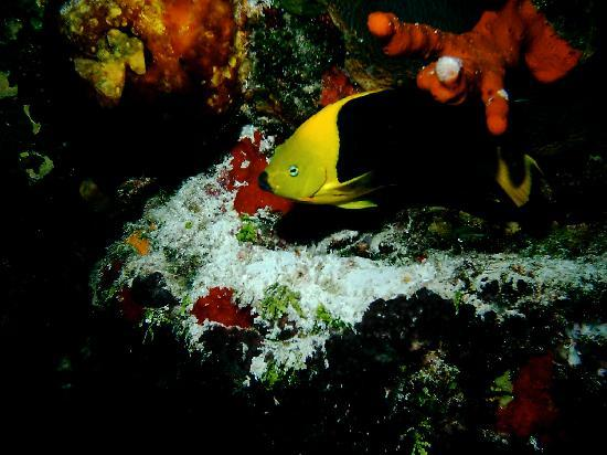 Yucab Reef - Fish and coral on reef