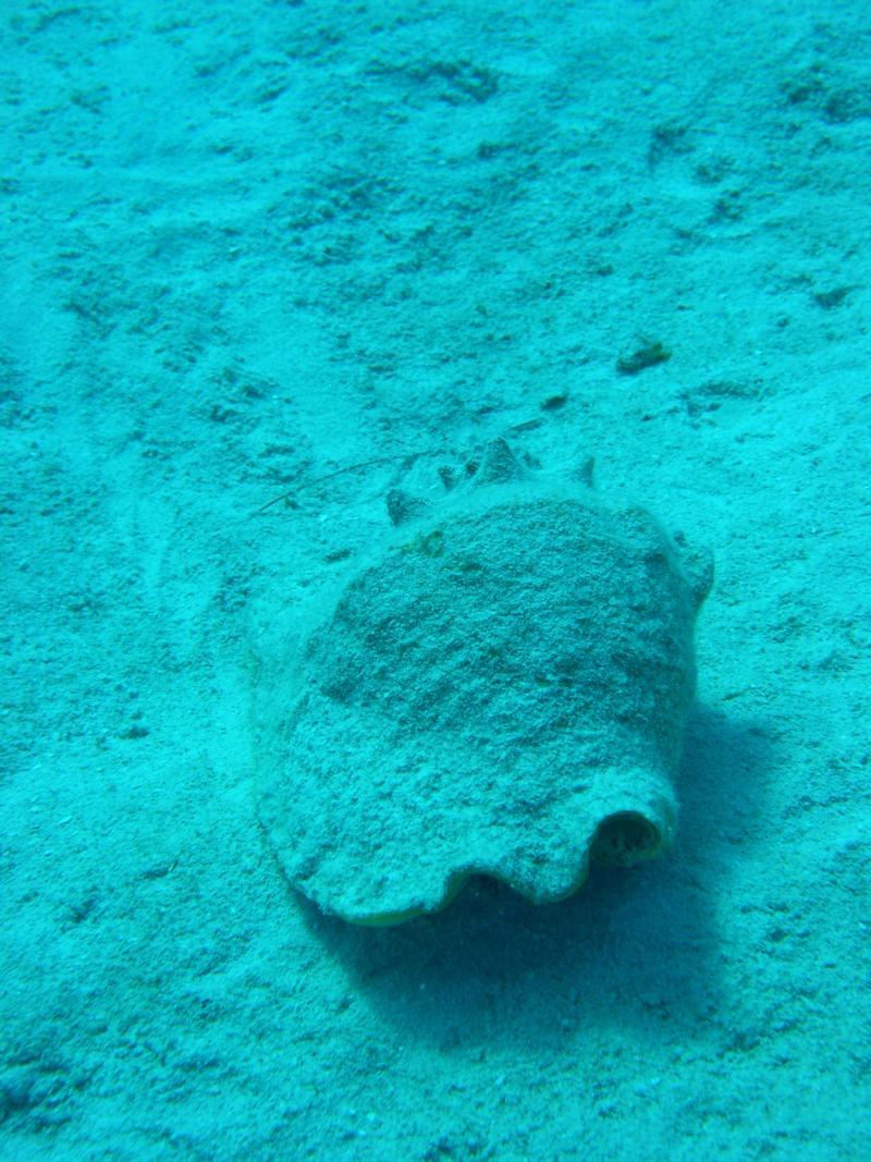 Mermaid at Sunset House aka Amphitrite - Flounder