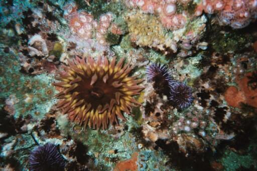 Santa Rosa Island - Lot's of color
