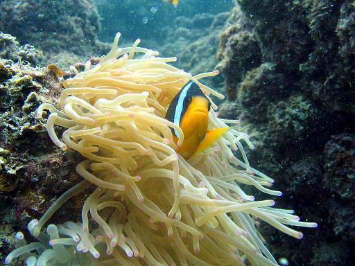Big Coral - Big Coral /Kish Island