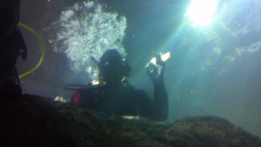 Denver Aquarium - Waiting to descend after basic skills test