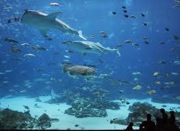 Georgia Aquarium Ocean Voyager Dive - Ocean Voyager