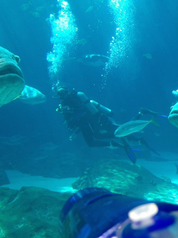 Georgia Aquarium Ocean Voyager Dive - as seen from the viewing window
