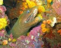 26 - Quepos Costa Rica - eel 26