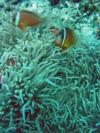 Nasi Yalodina - Up on the reef