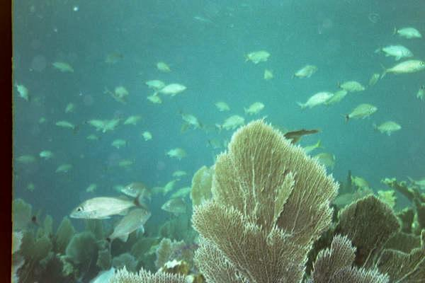 Virginia reef, Biscayne National Park - Over the reef