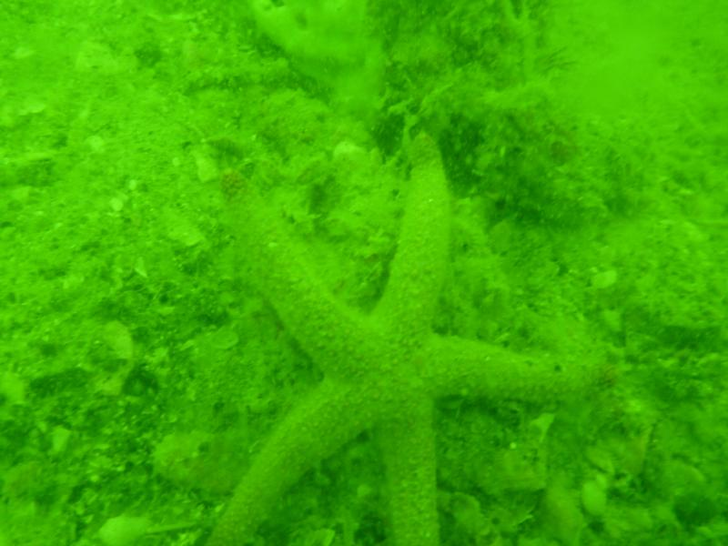 """""""The Boneyard"""" - Visibility is usually 1-2 feet from bottom. 30 feet deep. Murky green water until you reach bottom."""