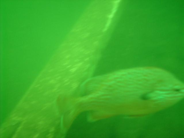 Beaver Lake - Fish at Beaver Lake Arkansas