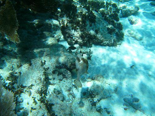 Alligator Reef - Alligator Reef - Key Largo, Florida