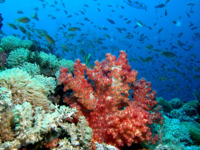 Puerto Galera (Sabang Beach) - Puerto Galera