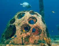Long Bay Artifical Reefs - Reef Ball
