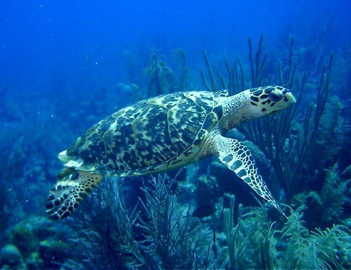Esmeralda Canyons - Freindly Turtle