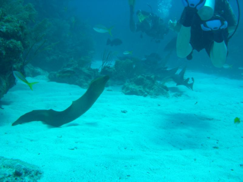Esmeralda Canyons - eel