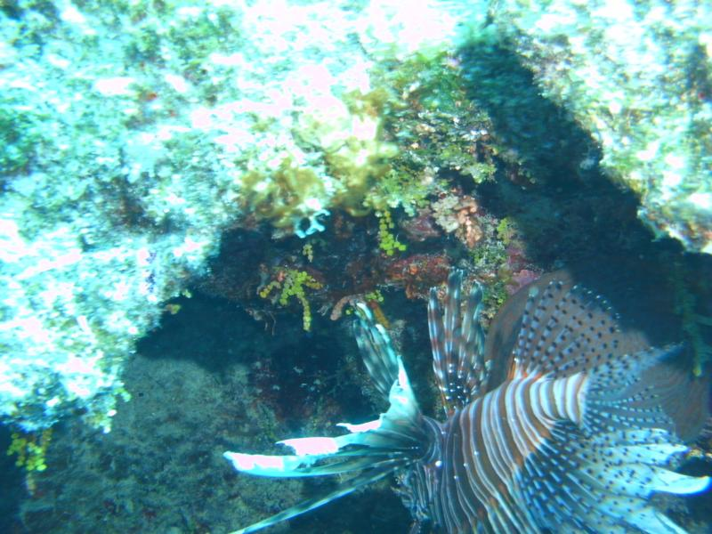 Eleuthera Reef - Diving the reef
