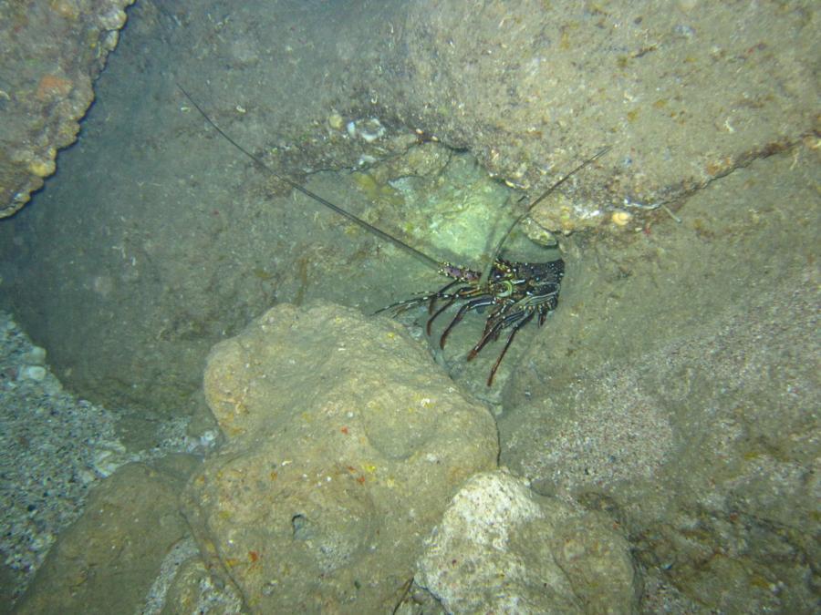 Hedo point - Typical marine life at Hedo