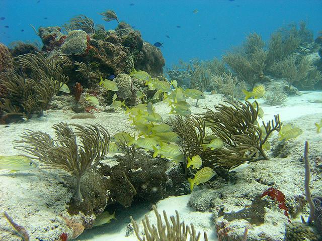 Villa Blanco Reef - Coral and fish at Paradise Reef