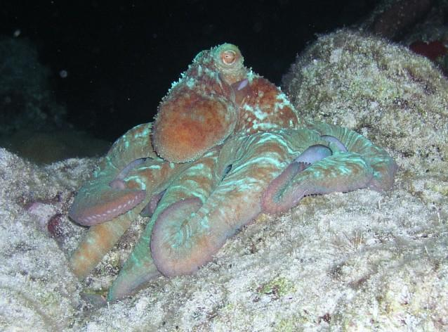 Villa Blanco Reef - Night dive on Paradise reef 2007