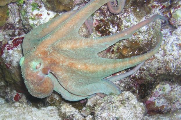 Villa Blanco Reef - I'm out of here!