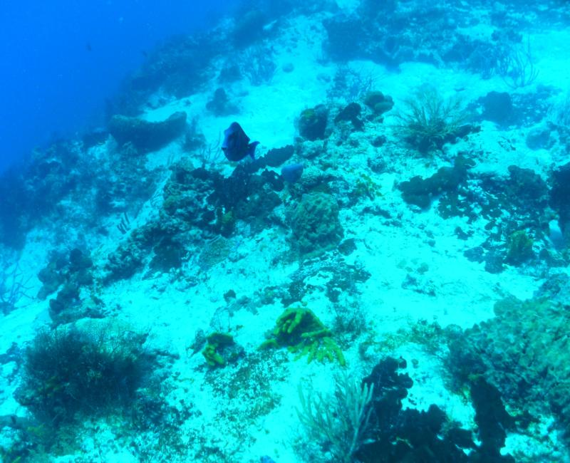 Tormentos Reef - Do you Speak Whale?
