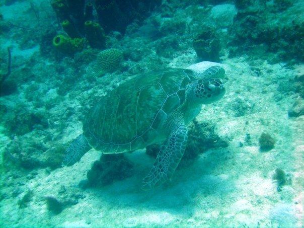 Carlisle Bay - Carlisle Bay (Turtle)