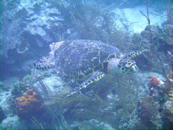 Carib Reef - Carib Reef