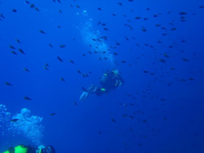 La Azohia,Spain - Deep Dive
