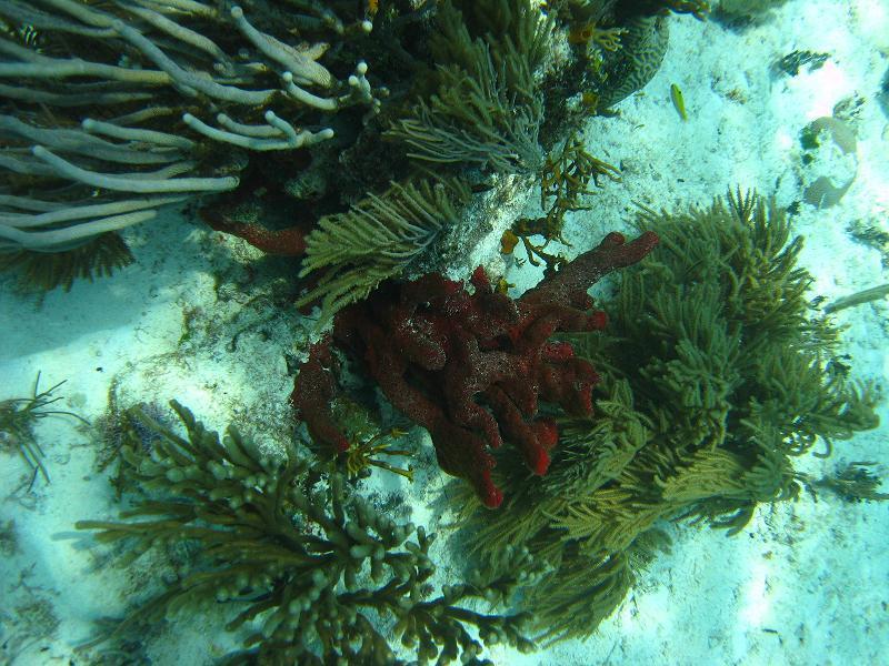 Cerebros - coral at Cerebros