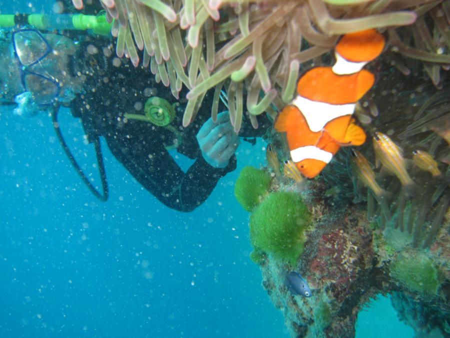 Flynn Reef - Gordon's Mooring - me and nemo