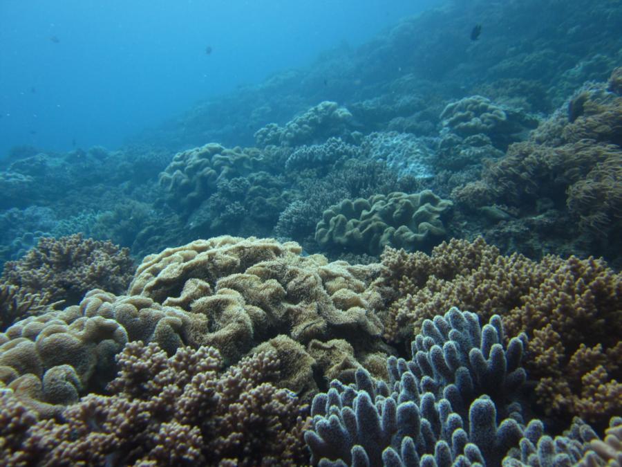 Sunabe Sea Wall aka Sunabe Seawall - Many large live coral gardens