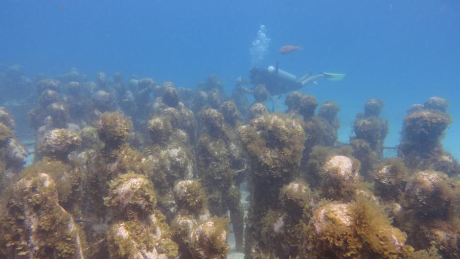 Manchones Reef Mujeres Underwater Museum aka MUSA - MUSA