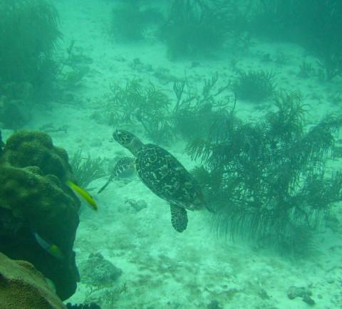 Skalahein Reef - Skalahein Reef