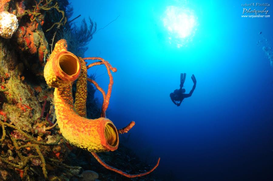Parguera's Wall - Tube Sponge Wall Dive Puerto Rico
