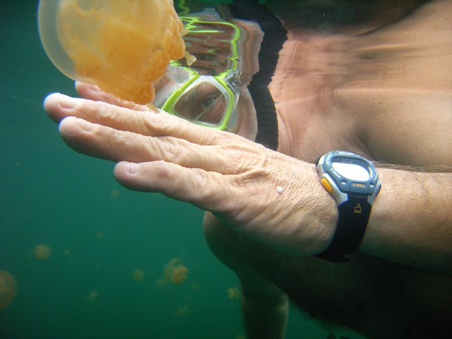 Jellyfish Lake - Jellyfish Lake, Palau
