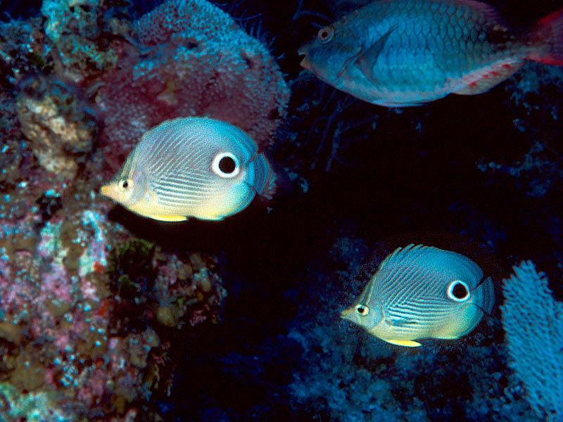 Shangrila - Shangrila Dive Site Columbus Isle Bahamas