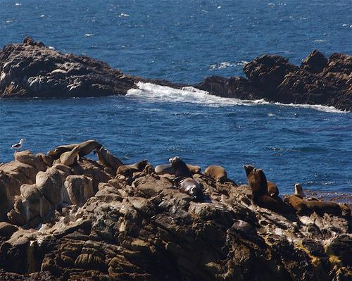 Point Lobos State Marine Conservation Area - Point Lobos State Marine Conservation Area